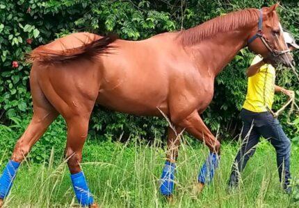 Tips Perawatan Kuda Paling Mendasar