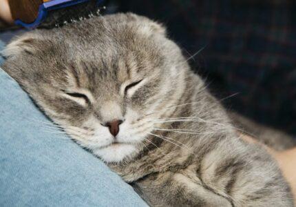 Merawat Kucing Hamil